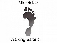 Mlondolozi Walking Safaris